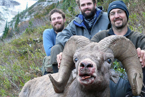 Rocky Mountain Bighorn Sheep Hunts