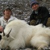Rocky Mountain Goat - Picture Gallery
